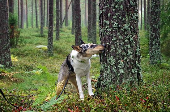 grundkurs_skog_01