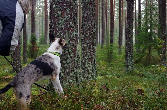 grundkurs_skog_02