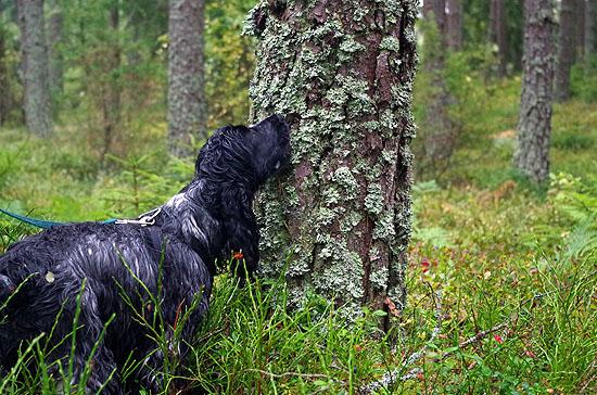 grundkurs_skog_08